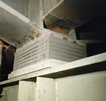For Neoprene Bridge Bearings Manufacturer Elastomeric